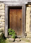 Old Wooden Door With Nettle