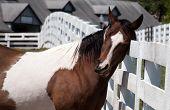 horse scratching head