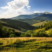 Hillside Meadow With Forest In Mountain