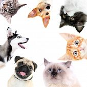 Collage of cute dogs and cats isolated on white