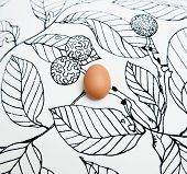 An Egg On Black And White Drawn Background