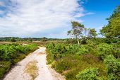 Dorset Heathland Track At Arne