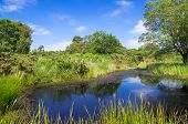 Pond At Arne In The Dorset Countryside
