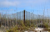 foto of gulf mexico  - Weathered beach fence in white sand dunes with foliage - JPG