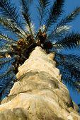 Tronco de árvore de Palma de baixo