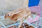stock photo of rabbit hutch  - Small red hand rabbit sits on white cell in store of animals - JPG