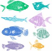 picture of fish  - set of different color fishes - JPG