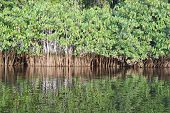 picture of vegetation  - French Guiana - JPG
