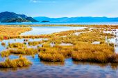 stock photo of swamps  - Shallow sea that connects with swamp by the sea with plenty of grass and plants - JPG