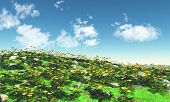 picture of buttercup  - 3D landscape with field of buttercups - JPG