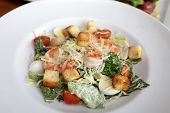 stock photo of caesar salad  - Plate with Caesar salad in the restaurant