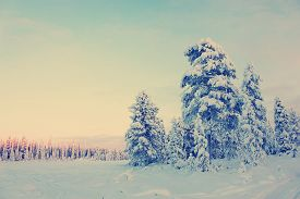 stock photo of snow forest  - Snowy field and snow - JPG