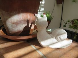foto of hermaphrodite  - White plaster snail with shadow on terracotta flowerpot - JPG