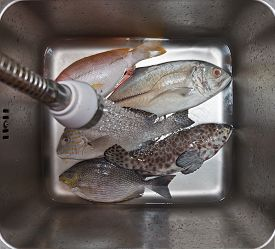 image of fresh water fish  - Fresh fish assortment ready for cooking in metal basin with pouring water top view - JPG