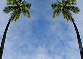 Palms tree texture background