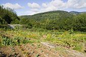 Organic Vegetable Plot
