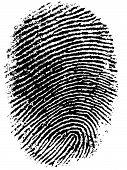 Fingerprint 6