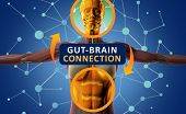 Gut-brain Connection Or Gut Brain Axis. Concept Art Showing A Connection From The Gut To The Brain. poster