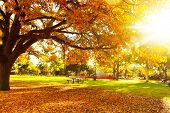 Autumn tree with sun beam