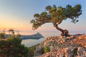 Amazing Tree Growing Out Of The Rock At Sunrise poster