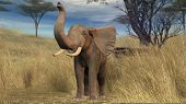 elephant in savanna