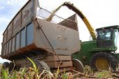 Closeup of sorghum harvested and transported in a rusty trailer on a cattle farm in Mato Grosso, Bra