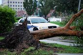 NEW ORLEANS - SEPT 2: A New Orleans police department patrol car lies behind a fallen tree in the af