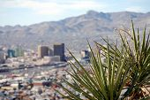 Skyline of downtown El Paso, Texas, with yucca plant in the foreground and mountains on the Mexican