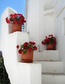 A typical Greek scene of red geraniums in terracotta pots against whitewashed walls.