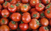 Qualitative background from tomatoes. Fresh tomatoes. Red tomatoes. Village market organic tomatoes poster