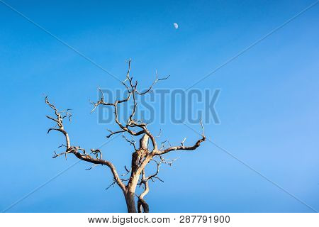 Landscape Of Dead Tree At
