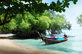 tree in water and long boats on beach in Thailand
