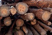 Stacked Firewood In A Pile Outdoors Close-up. A Pile Of Chopped Firewood Ready For Stacking. Prepara poster
