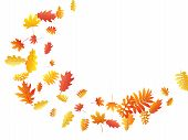 Oak, Maple, Wild Ash Rowan Leaves Vector, Autumn Foliage On White Background. Red Orange Yellow Sorb poster