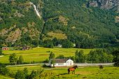 Horse On Grass Pasture On Mountain Landscape In Flam, Norway. Horse On Green Meadow Sunny Day. Summe poster