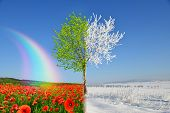 Winter and spring landscape with blue sky.  Concept of change season.  poster