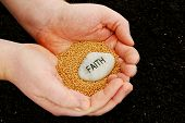 image of mustard seeds  - A religious concept photo that uses mustard seeds and an engraved faith stone held over soil - JPG