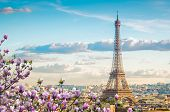 Famous Eiffel Tower And Paris Roofs With Spring Tree, Paris France poster
