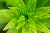 Water Drops On Green Plant Leaf poster