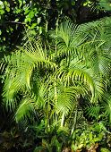Bright tropical greens of palm trees.