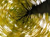 Twirling leaves in a tree