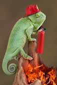 Chameleon Firefighter