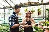 Image of two amazing gardeners posing in the nature greenhouse garden work with flowers plants. poster