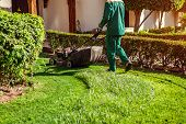 Man Mowing The Grass With A Lawn Mower By Hotel. Worker Cuts The Lawn In Summer Garden Wearing Unifo poster