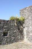 Stone Walls With Cacti