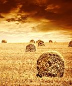 Harvest time of wheat, beautiful sunset, scenic landscape, golden rye field with haystack, season of