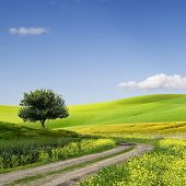 picture of rape-field  - Green Grass Field Landscape with fantastic clouds in the background - JPG