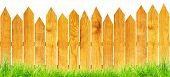 wood fence with green grass isolated