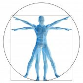 High resolution Vitruvian human or man as concept,metaphor or conceptual 3d anatomy body for biology