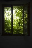 View of shrubbery behind silhouette window